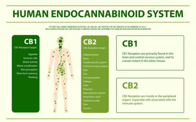 WHAT IS THE ENDOCANNABINOID SYSTEM?